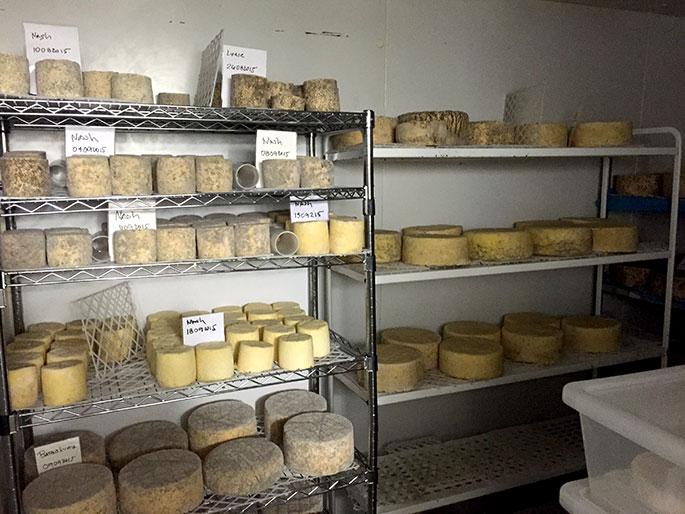 Cheese making class in Tottenham