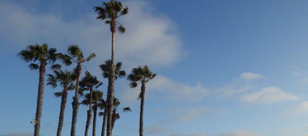 GUIDE: Where to eat in LA